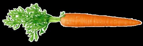 21 weeks carrot